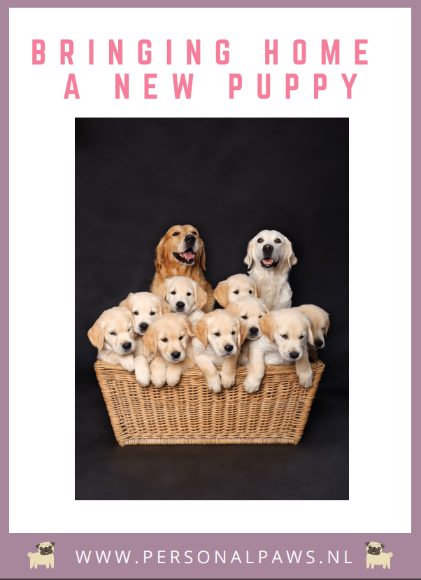 Cover Bringing home a new puppy