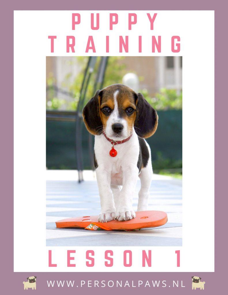 puppy_lesson_1